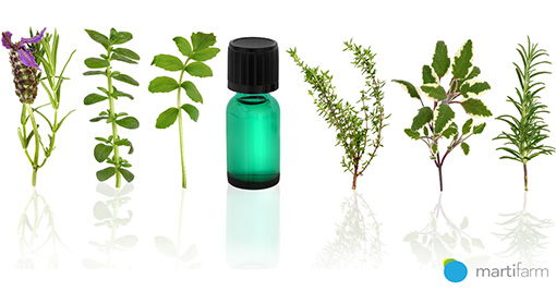 The importance of plants in the pharmaceutical industry